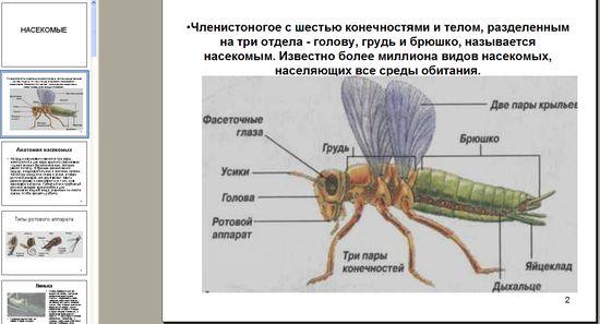 Презентация на тему насекомые в