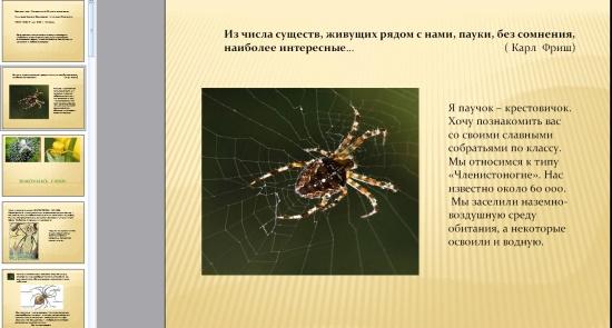 Презентация на тему паук птицеед